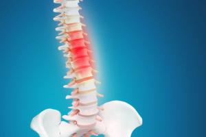 spinal cord vertebrae