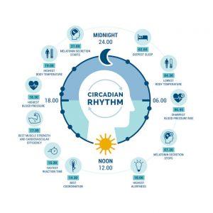 When coordinated properly, the circadian rhythm balances the sleep-wake cycle