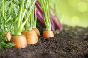 Fresh, organic vegetables are best to get your daily essentials vitamins and minerals.